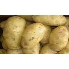 Картофель среднеранний Сантэ 2 кг