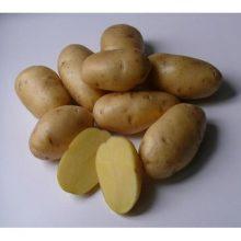 Картофель семенной ранний Импала 2 кг